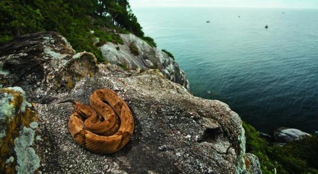 Ilha-de-Queimada-Grande-12