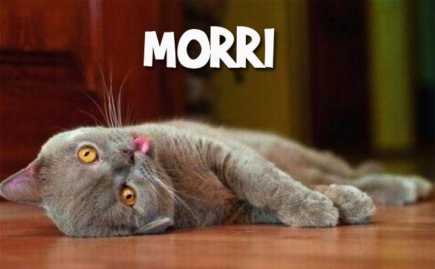 MORRI
