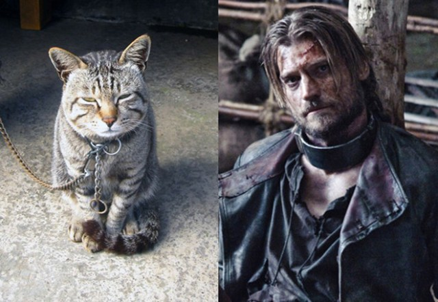 game-of-cats-06