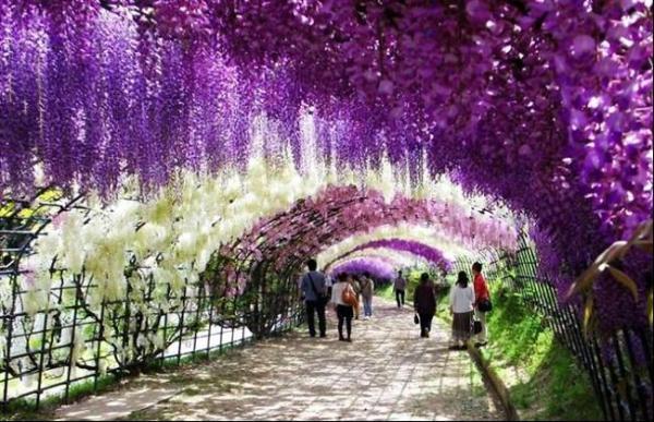 ruas-cobertas-flores-arvores-16