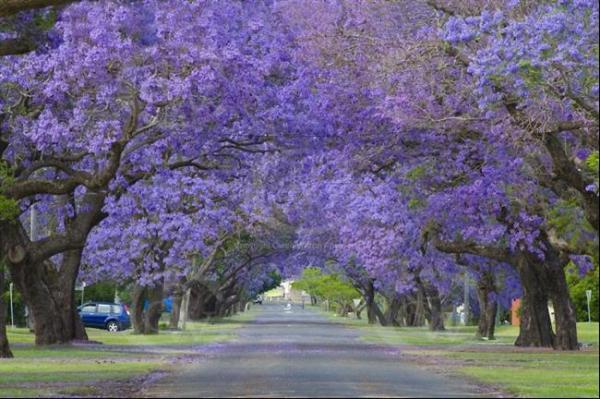 ruas-cobertas-flores-arvores-7