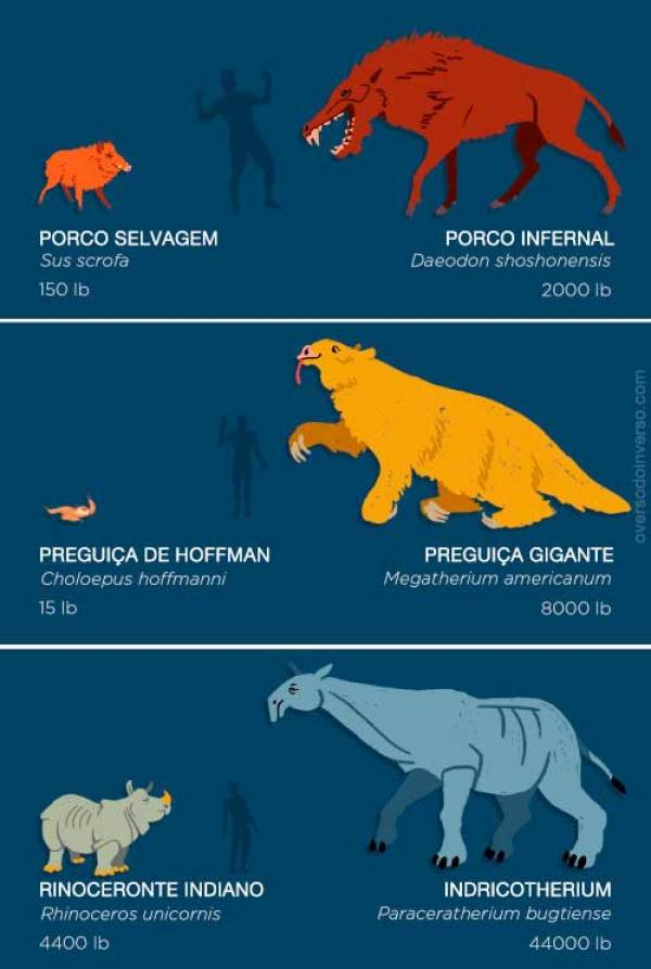 animais extintos 03