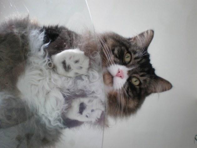 gato-03