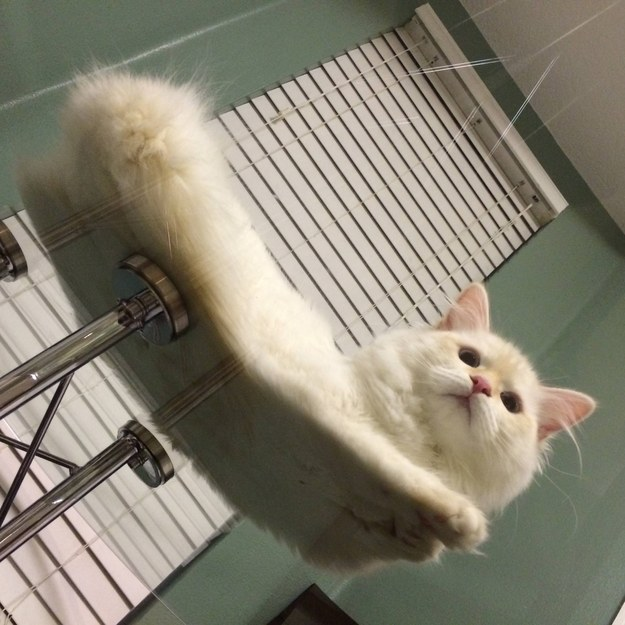 gato-15