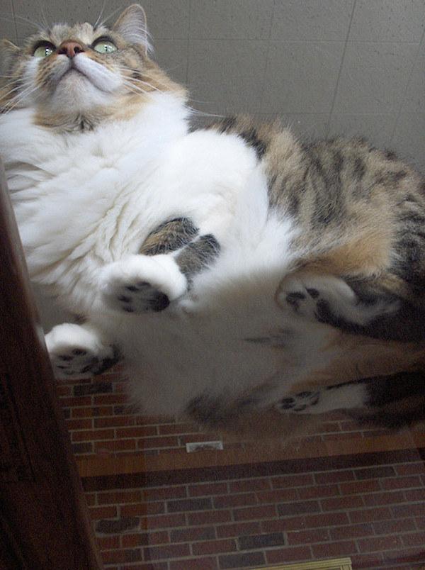 gato18