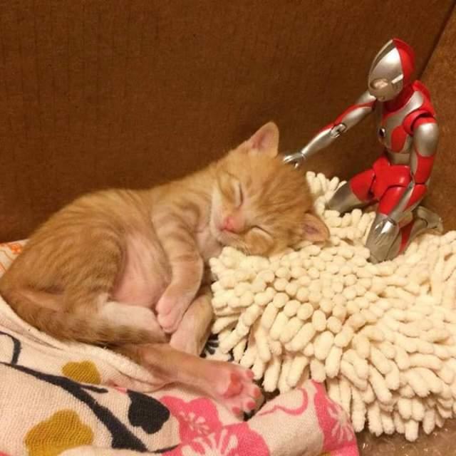 gato e ultraman 03
