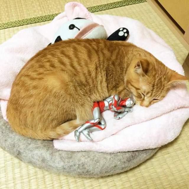 gato e ultraman 08