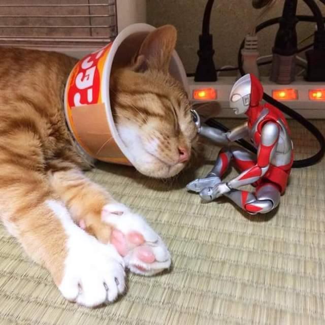 gato e ultraman 12