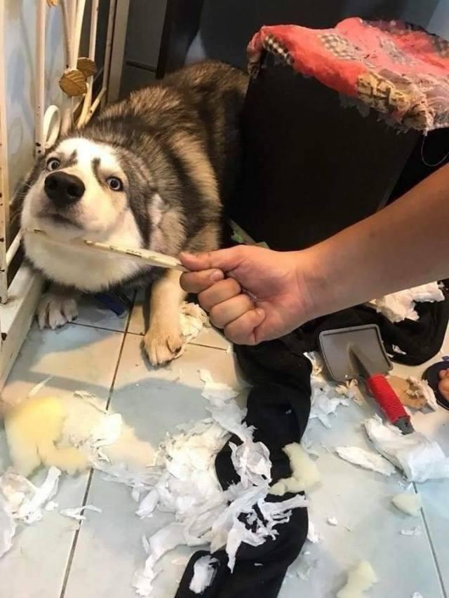 festa canina