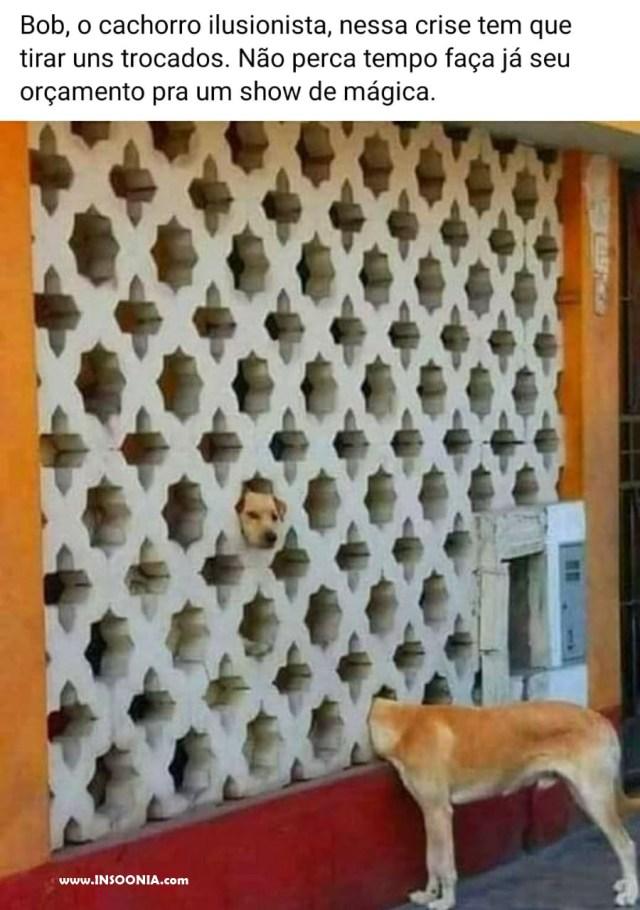Cachorro ilusionista