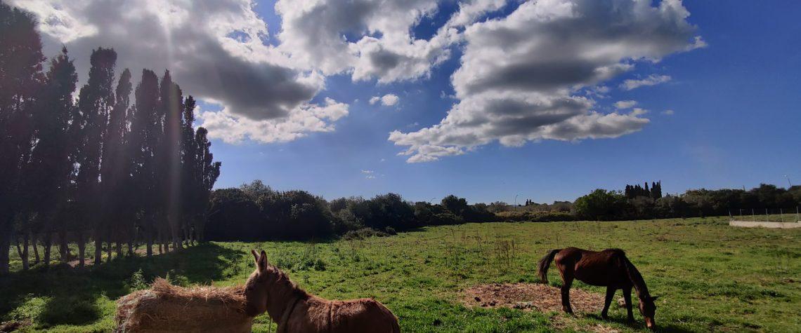 La necessaria riforma della PA tra fannulloni, asini e cavalli di razza.