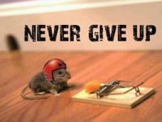 Persistence - Never give up