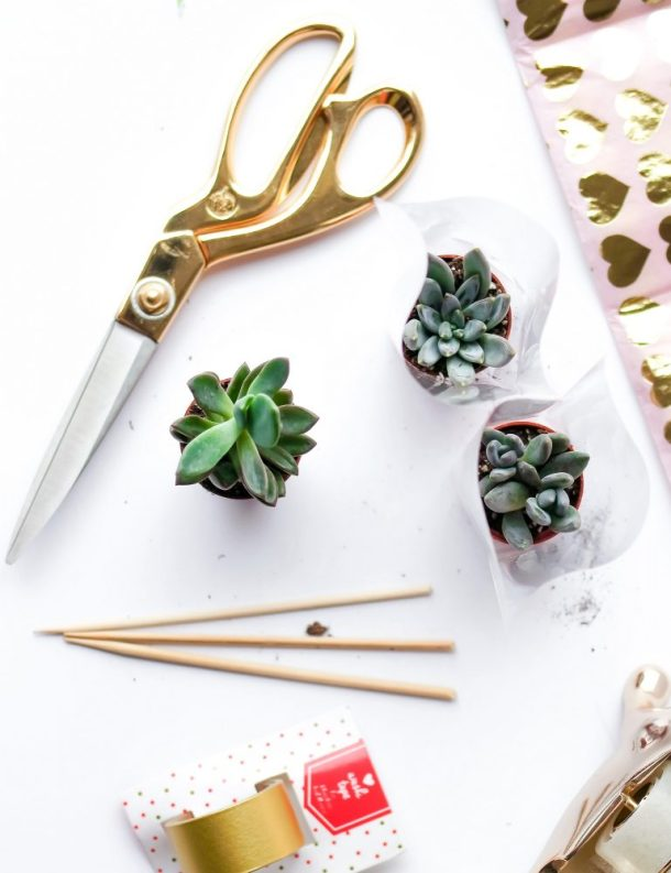 Valentines That Don't Succ: DIY Succulent Valentines!
