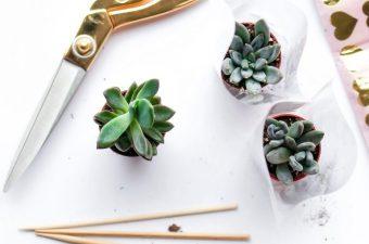 Valentines That Don't Succ: DIY Succulent Valentines!