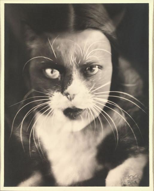 med_14-_io-gatto-cat-i-_wanda-wulz-jpg