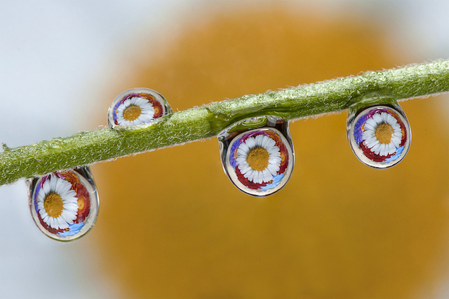 Water-Drops-Reflections-14