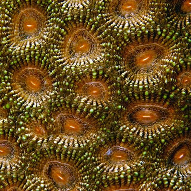 Fascinating-Macro-Shots-of-Underwater-Coral_5-640x640