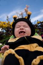 funny babies - bee baby
