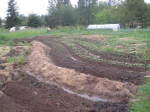 Raised Contour beds