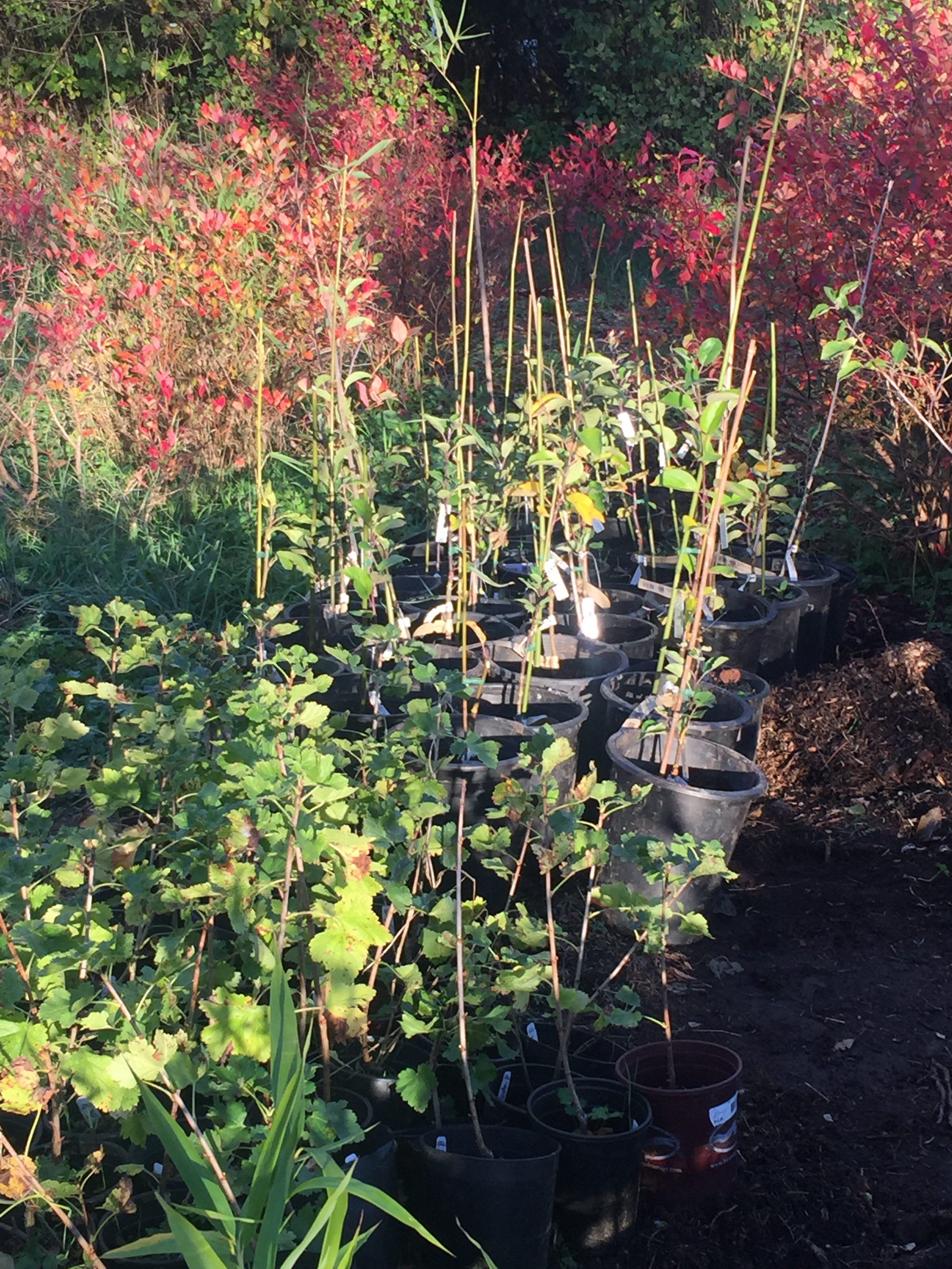 Spring Plant Sale At Our Nursery Inspiration Farm