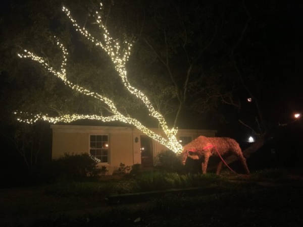 "15. ""Someone In My Neighborhood Is Making Good Use Of Their Low Hanging Oak Tree Branches This Christmas."""