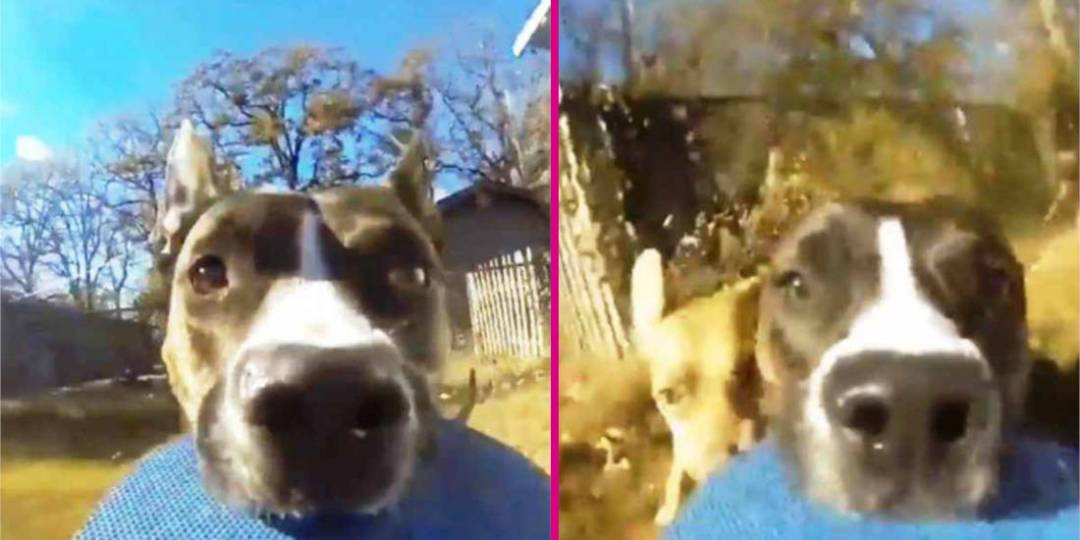 A Dog Steals Owner's GoPro And The Result Will Make You Laugh