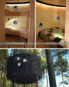 camping trends - treehouse camping - tree-home-model-rooms