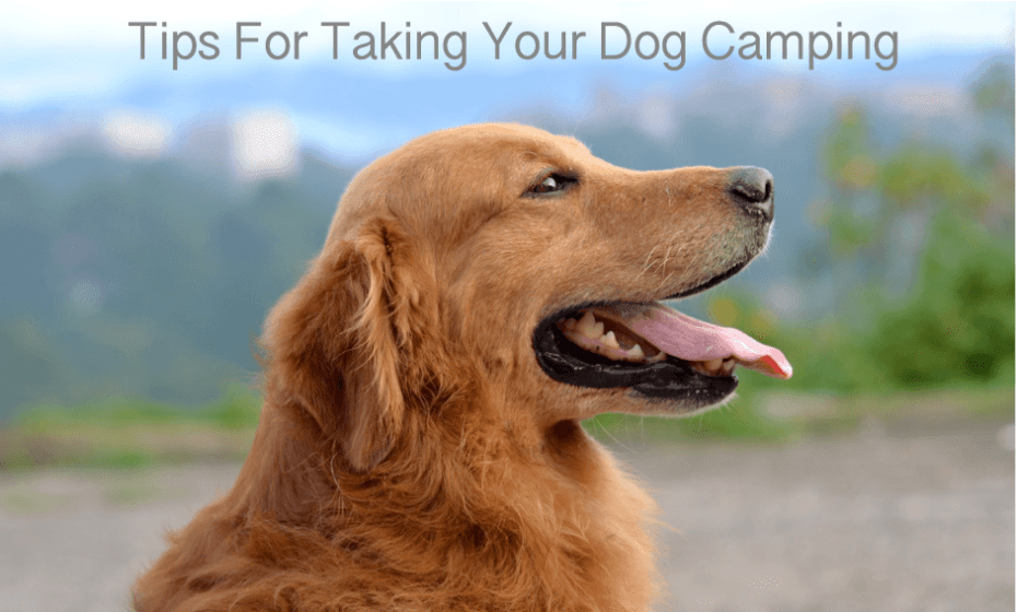 tips for taking your dog camping