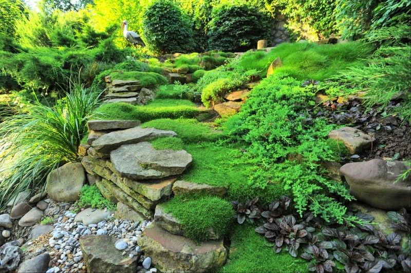 Garden Design Garden Design With Growing LowMaintenance Moss