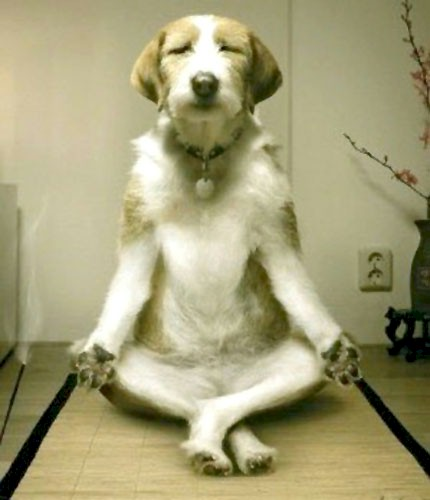 https://i0.wp.com/www.inspiredliving.com/stress/DogMeditation.jpg