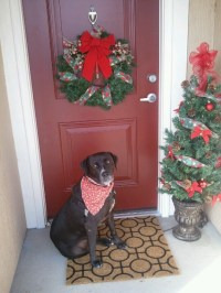 Christmas Decorations For Apartment Door ~ Christmas and
