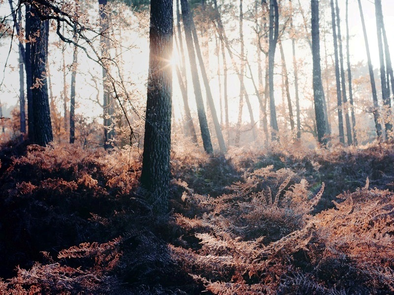 30 mind blowing forest