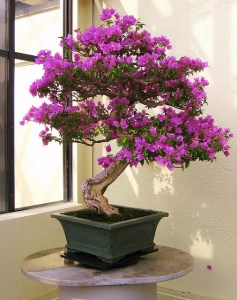 Bonsai tree 2
