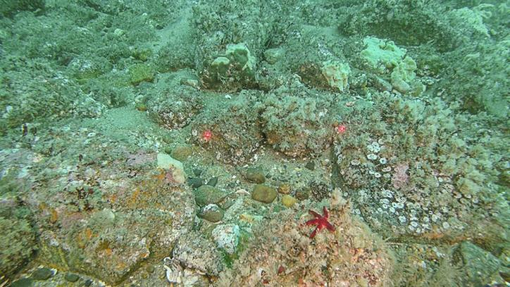 Image of rocky bottom habitat on the seafloor near Block Island Wind Farm. Captured by INSPIRE Environmental with our Plan View camera system.