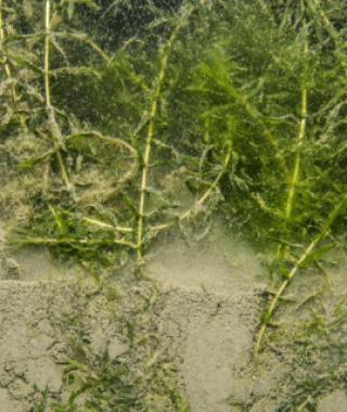 Refined Harbor Sediment Assessment