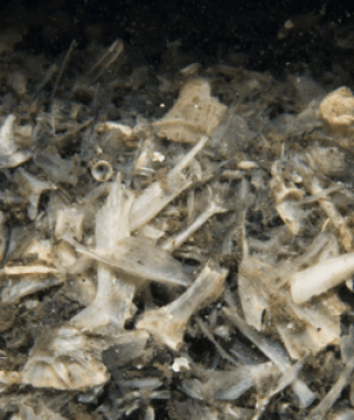 Mapping Seafood Waste Impacts