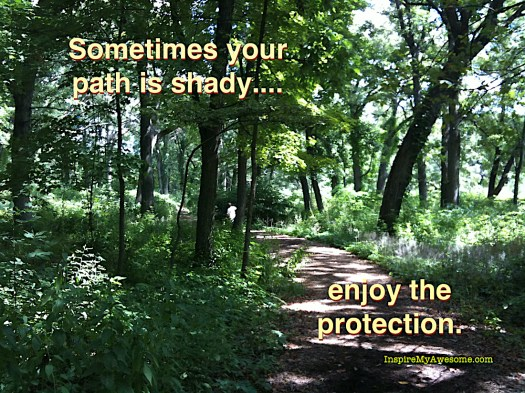 Sometimes your path is shady...