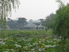 109 - Lotus Field