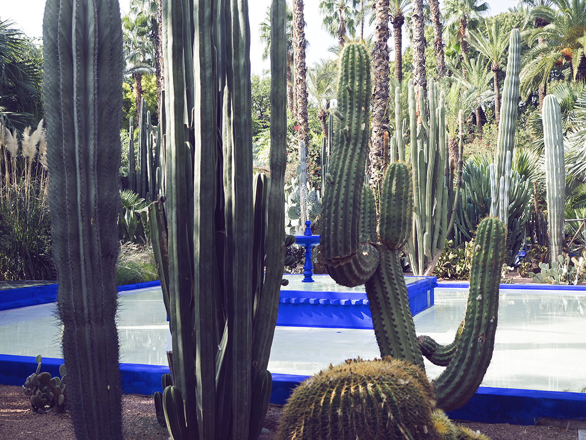 Morocco travel diary Inspiring Wit yves saint laurent jardin majorelle cacti garden and fountain