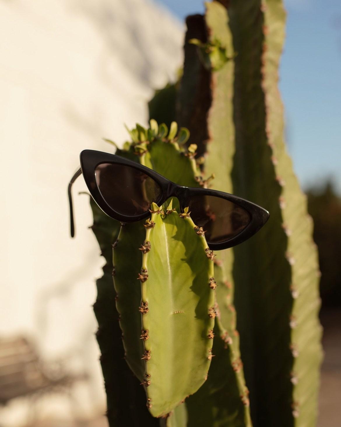 cacti sunglasses