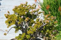 Shade Succulents: Drought-Tolerant Garden Guide | INSTALL ...