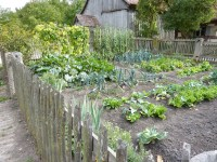 Vegetable Gardening 101: TOP 10 Mistakes To Avoid ...