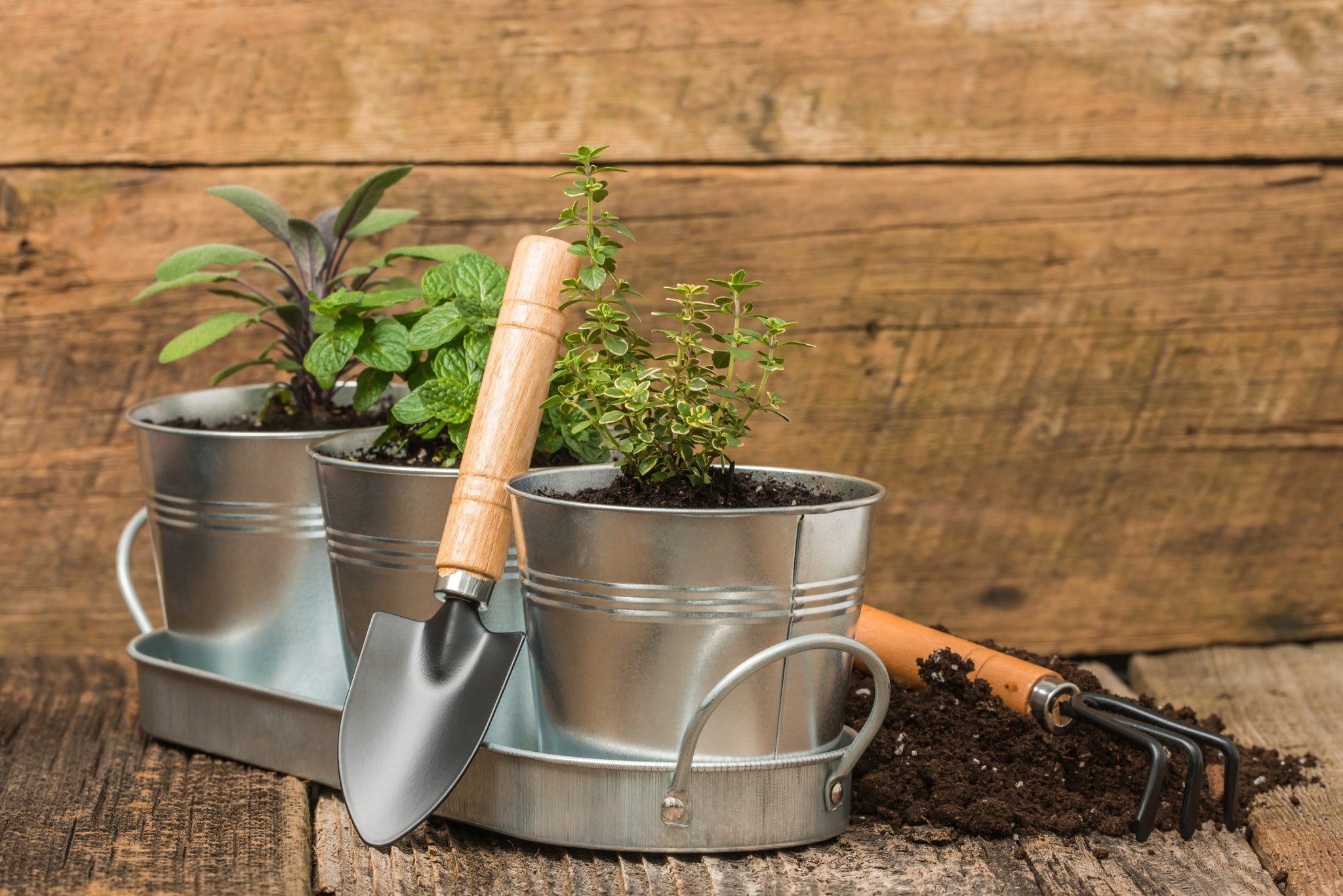 patio container garden pro