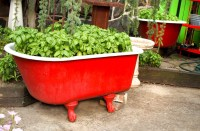 How to Choose Pots for a Patio Container Garden (PRO Tips ...