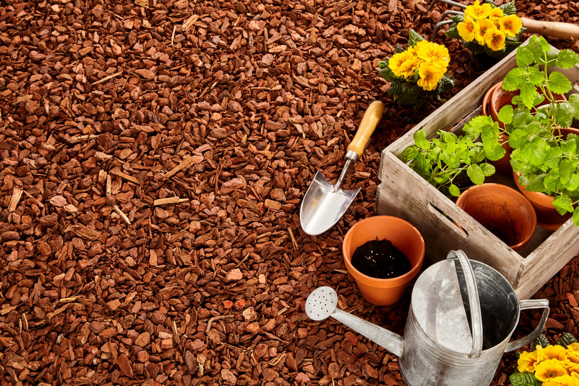 Alternatives To Grass In Backyard Lawn Replacement Tips
