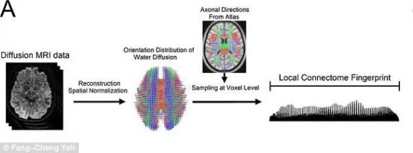 brain-fingerprint