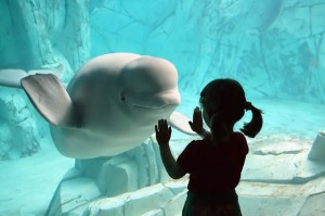 beluga-whale-waving-smiling-at-little-girl-HI-FRIEND-Photograph-by-MARCO-BALZAN