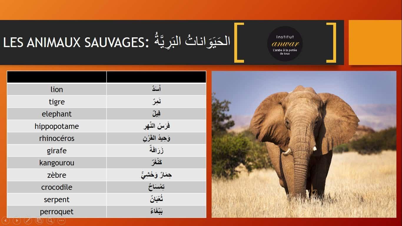 animaux-sauvage