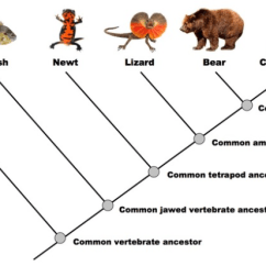 Branches Branching Tree Diagram Simple Microscope How To Read A Dendrogram - The Institute Of Canine Biology