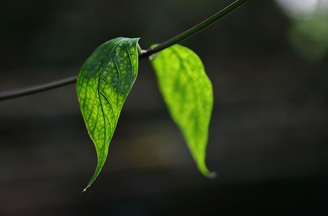 """¿Qué es el contenido """"Evergreen"""" y cómo crearlo?"""